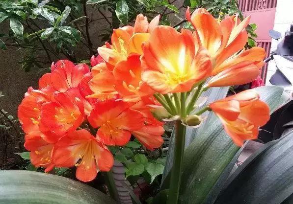 """6种有着""""美好""""寓意的盆栽植物,家里养上几盆,旺财又旺家!"""