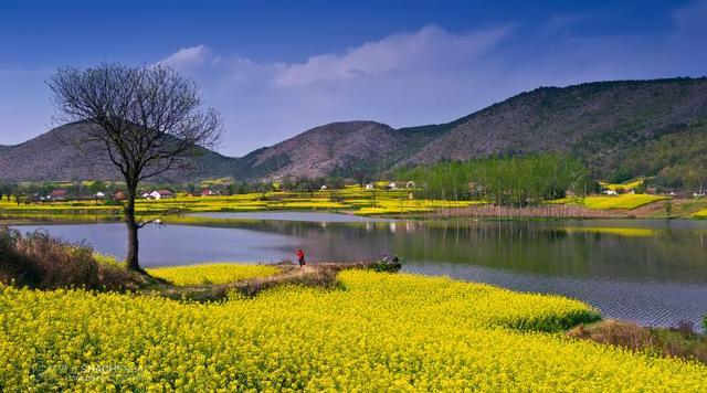 陕南绿茶属于什么茶,陕南绿茶的功效与作用_茶艺网
