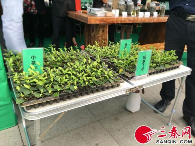 古代传说有关陕南绿茶