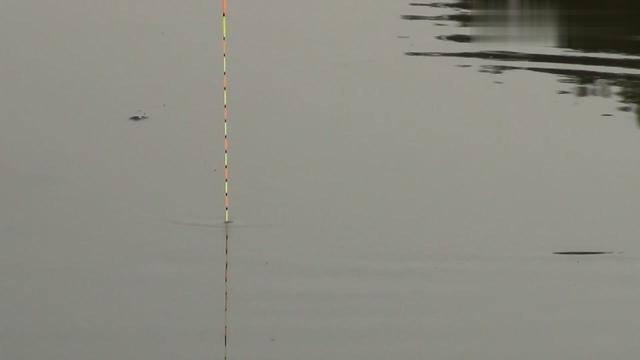 野钓:两米七的鱼竿收获白鲢一尾,那手感暴爽