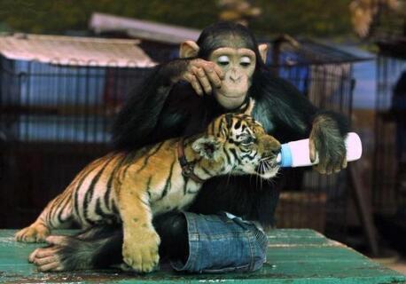 杭州野生动物园攻略