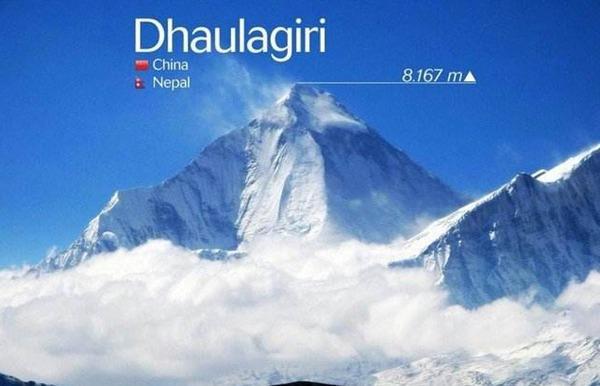 世界第七高峰留住了9条生命陪伴