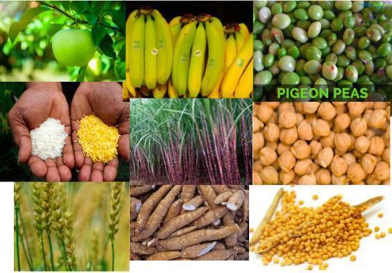 转基因农作物又获批!为什么说转基因是安全的?多位院士力挺