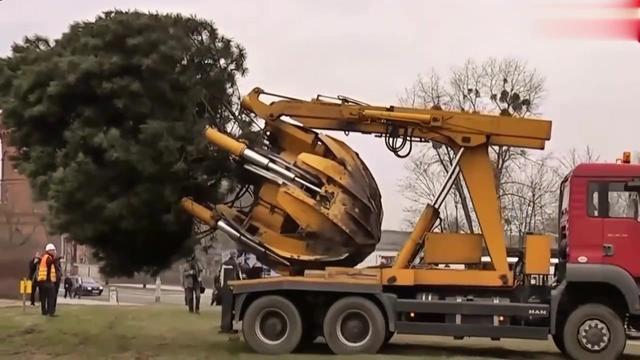 挖树机厂家联系方式