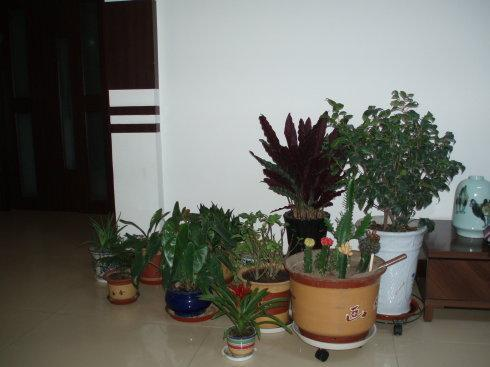 10种室内最好养的植物 观赏价值高还可以净化空气_排行榜123网