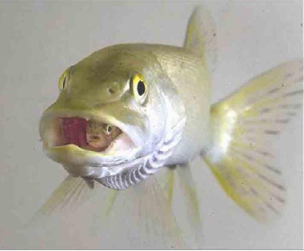 世界上体型最大的肉食性鱼类,我们是朋友啊