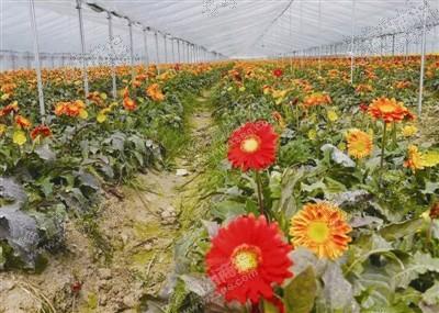 温州花卉零售-顺企网温州黄页