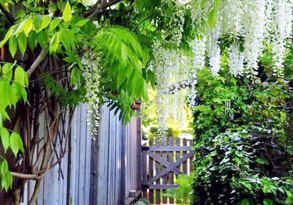 几款庭院绿化常用篱笆墙,不求人也能自己做_手机网易网