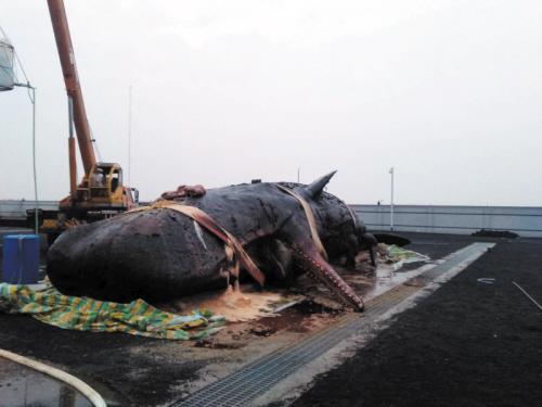 海底小纵队:害怕潜水的小抹香鲸,听了呱唧的话跑... _网易视频