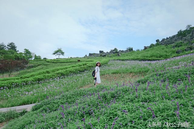 渭南出发,趣游重庆——龙鳞石海/黑山谷 国家5A级景区