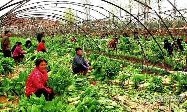 陕西西安市有机新鲜蔬菜礼盒批发配送公司_顺企网