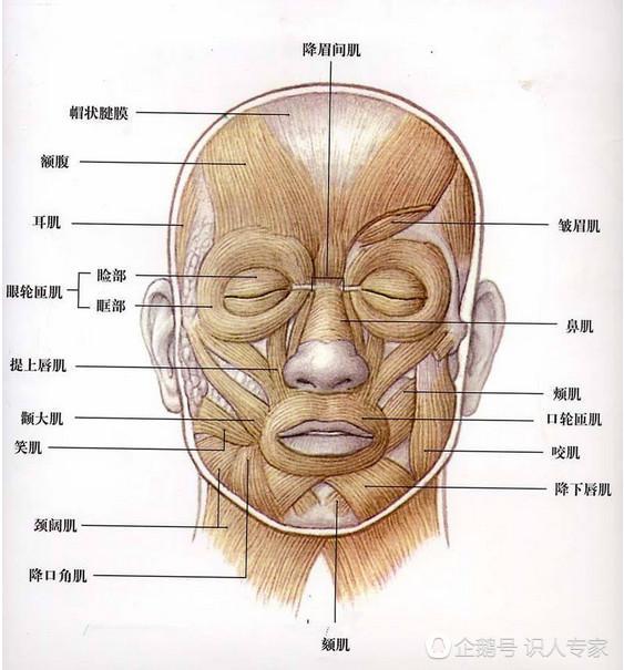 面部肌肉是美的重要原因,宁静是top,杨采钰合格,刘亦菲太差了