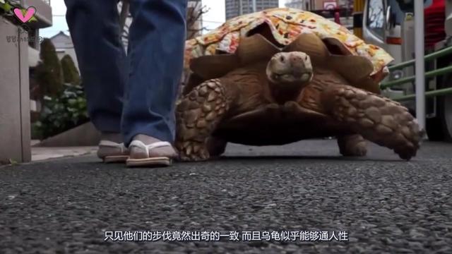 老爷爷带大乌龟出门散步,因路人围观,网友:真人版龟仙人?