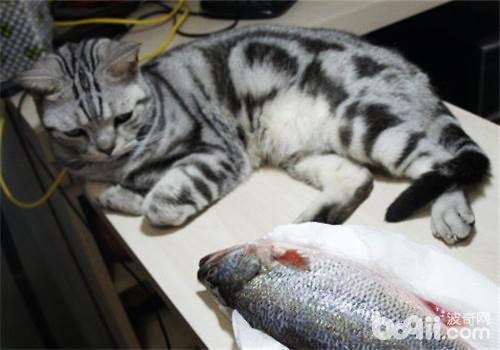 猫生病不吃东西怎么办?
