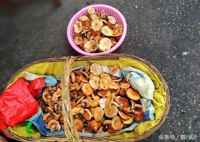 天鹅菇又名松树菇,菌类,植物花草,摄影,汇图网www.huitu.com