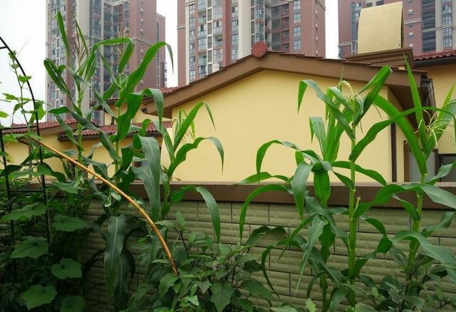 樓頂種菜池設計