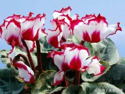 世界十大净化空气植物,净化空气植物排行榜 - 花语网