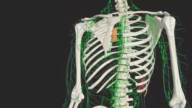 淋巴系统由什么组成