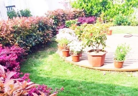 樓頂花園圖片