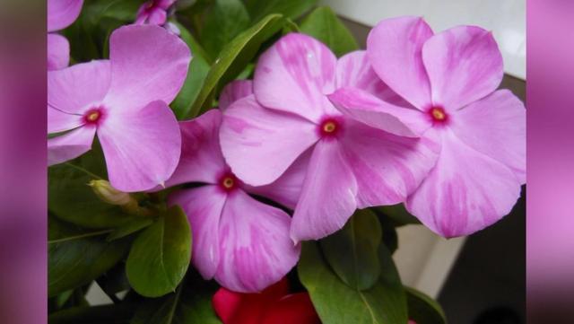 万紫千红总是春图片