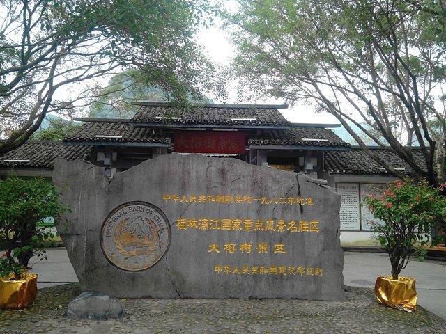 广西最美的风景在阳朔,1500年的大榕树见证了刘三姐的爱情