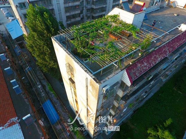 樓頂種菜設計