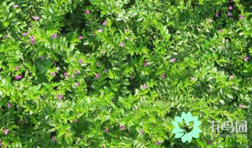 农村1000种常见植物