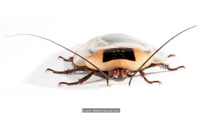 蟑螂是什么样子的?
