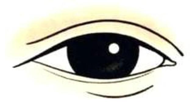 极准的观面识人,麻衣神相(7)——相眉(中)