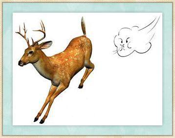 看图猜动物-百科