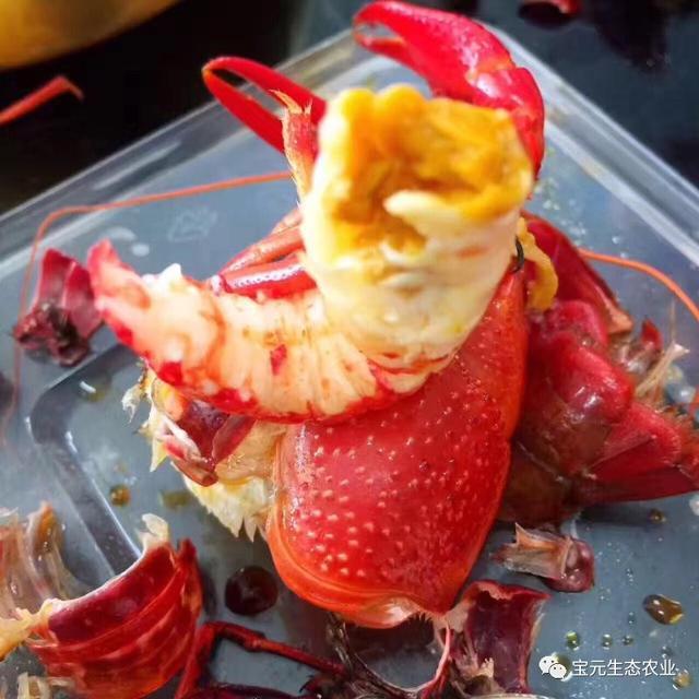 清水虾养殖