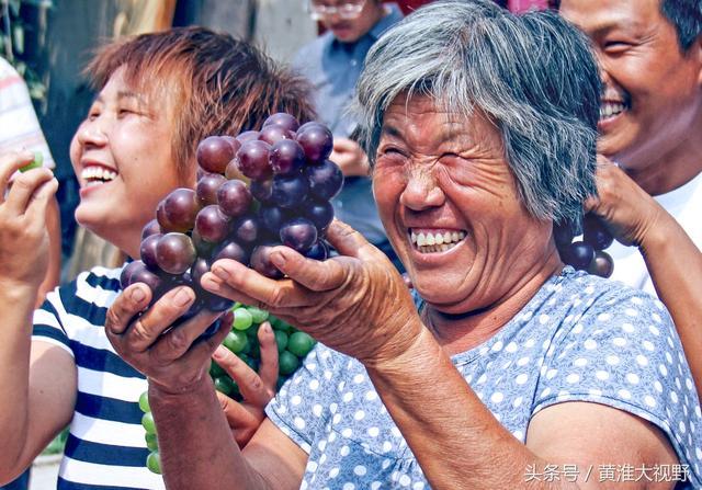高清葡萄园图片_站长素材