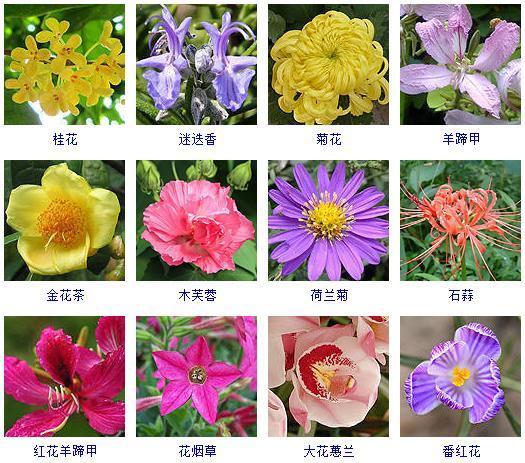 100种热带花卉