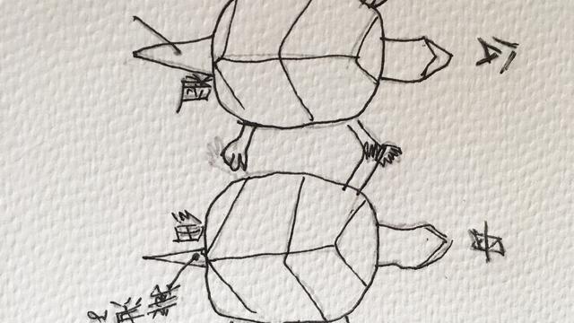 乌龟如何分公母?教你辨别小技巧,再也不怕买错了!