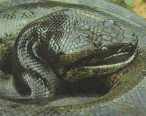 世界上最大的蛇,千奇百怪的蛇类吓倒众人