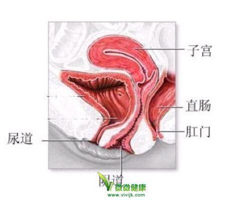 女人器官有多少种形状