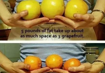 脂肪与肌肉对比图