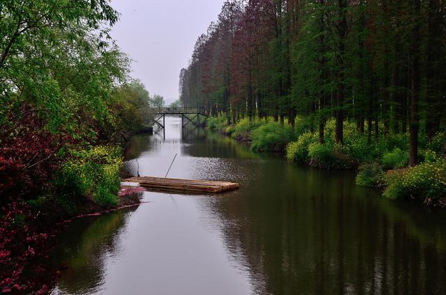 水上森林公园位于江苏省兴化市千垛镇,是一个非常... _新浪看点