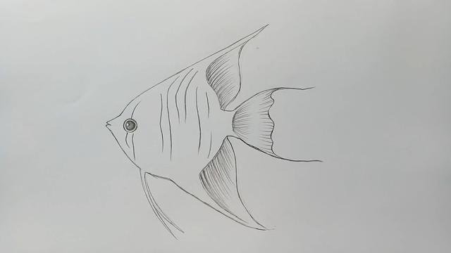 鱼简笔画图片大全可爱