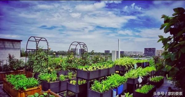 私家樓頂菜園實景圖片
