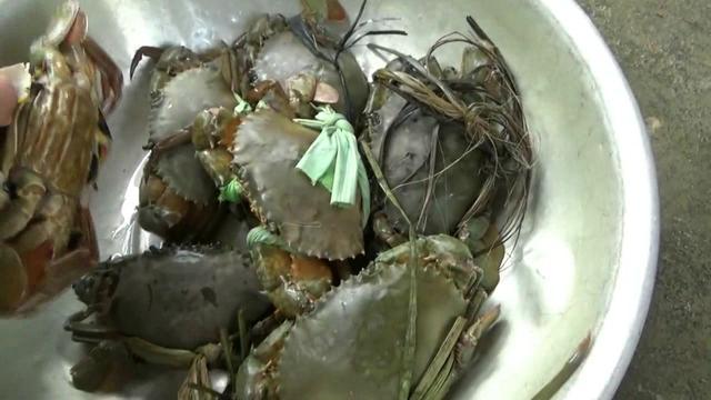 大海的馈赠,海边的海藻里边藏着美味的螃蟹