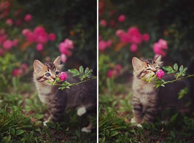 图虫人文摄影:心有猛虎 细嗅蔷薇