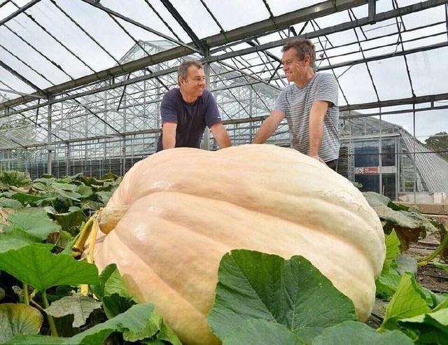 农民种出两千斤的巨型南瓜破吉尼斯,够一家三口吃两年!