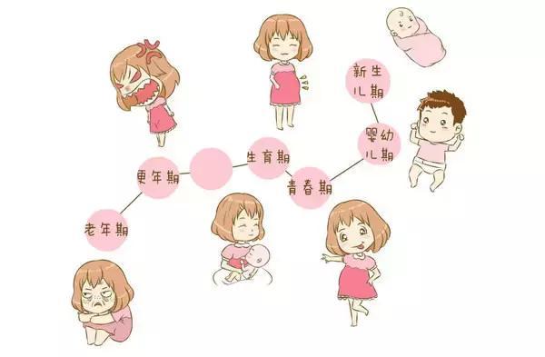 女人的身体器官结构图