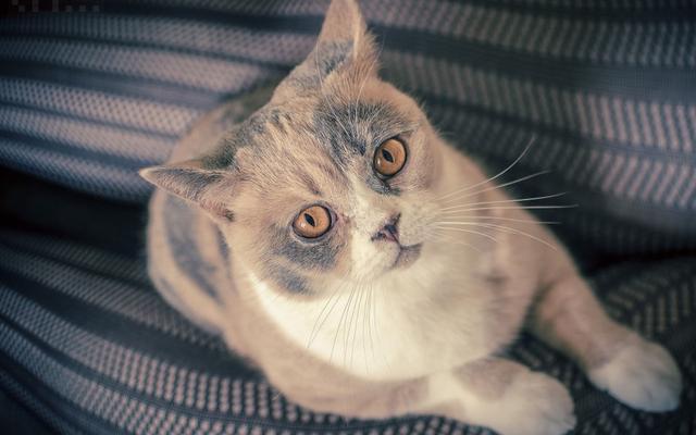 可愛貓咪賣萌圖片頭像