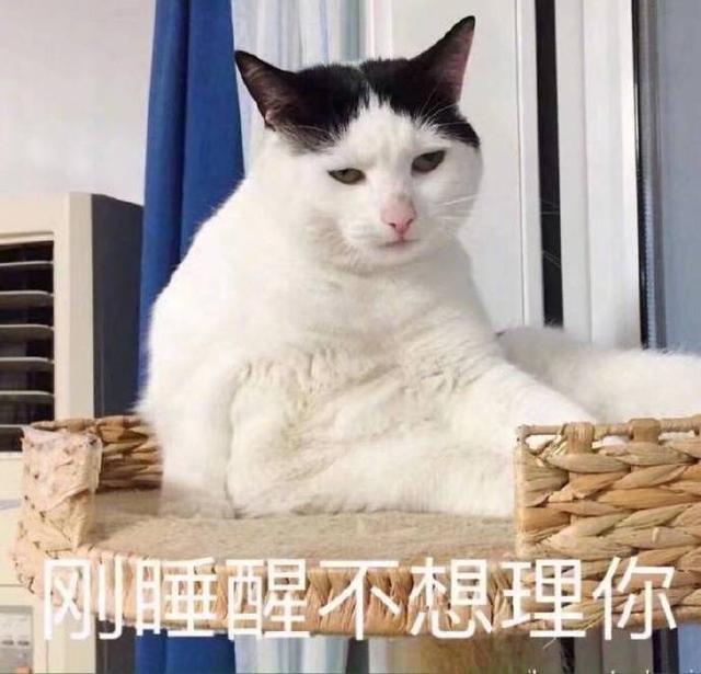 鄭爽可愛賣萌圖片