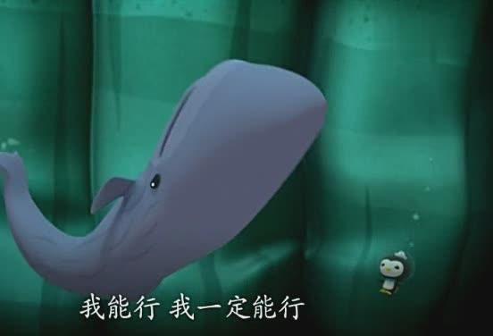 海底小纵队:小抹香鲸游到一半,往上游,晕了