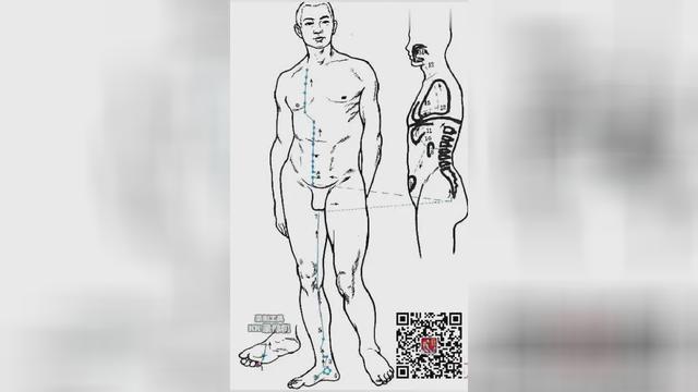 足少阴肾经准确位置图及作用,肾经-勇保健网