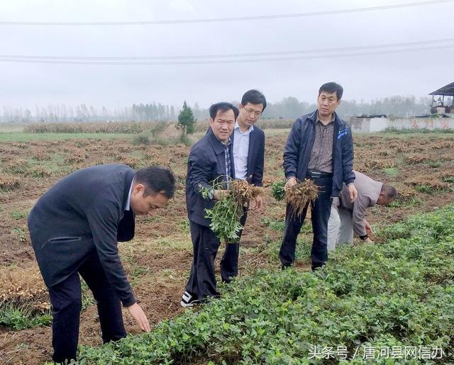 南阳、唐河、新野等花生价格汇总,白沙通米价格收4.2-4.3元左右