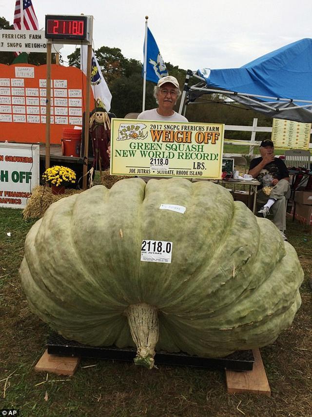 男子种出近2千斤巨型南瓜,已刷新3项世界纪录